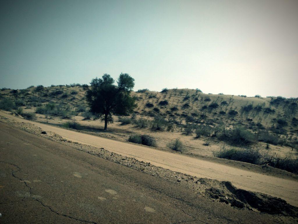 TTV Landscape 2
