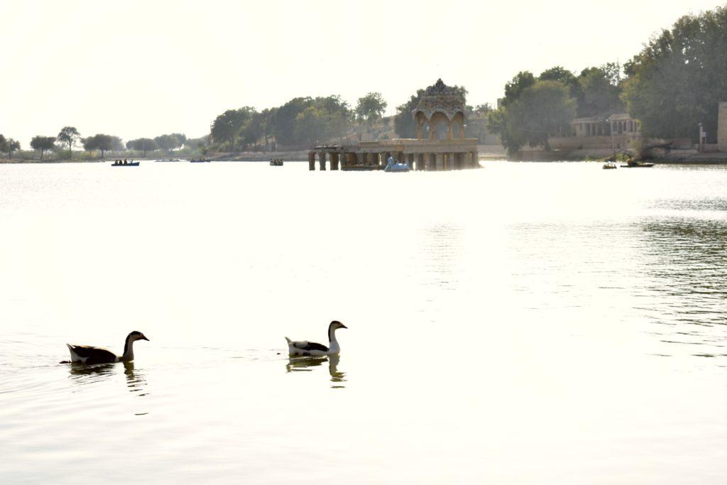 TTV Gadisar Lake Ducks